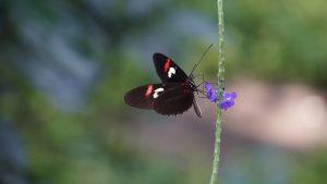 """COMUNICAT DE PRESĂ: """"Ziua Internațională a Biodiversității"""""""