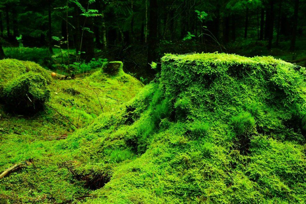 Ministrul Mediului, Costel Alexe, are în plan un proiect de împădurire a a cel puțin 500.000 de hectare de terenuri degradate. MINISTRU MEDIULUI ,COSTEL ALEXE ,a cerut tuturor primarilor din ţară să identifice în timp cât mai util terenurile degradate şi să demareze măsurile necesare în vederea completării fişei perimetrului de ameliorare, care va sta la baza împăduririi terenurilor în campania de împădurire din toamnă şi în cele din sezoanele următoare. Aştept o implicare serioasă şi promptă a tuturor UAT-urilor (Unităţi Administrativ-Teritoriale, n.r.), mai ales că terenurile degradate pot deveni păduri pentru toţi românii.