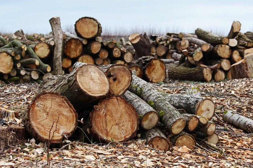 """USR propune înființarea unei """"DNA a pădurilor"""", a tăierilor ilegale de păduri, a depozitărilor ilegale, traficului de deșeuri și nerespectării normelor anti-poluare"""