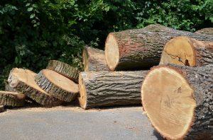 Proiect ce vizează diminuarea fenomenului infracţional în cazul tăierii pădurilor, adoptat de Senat