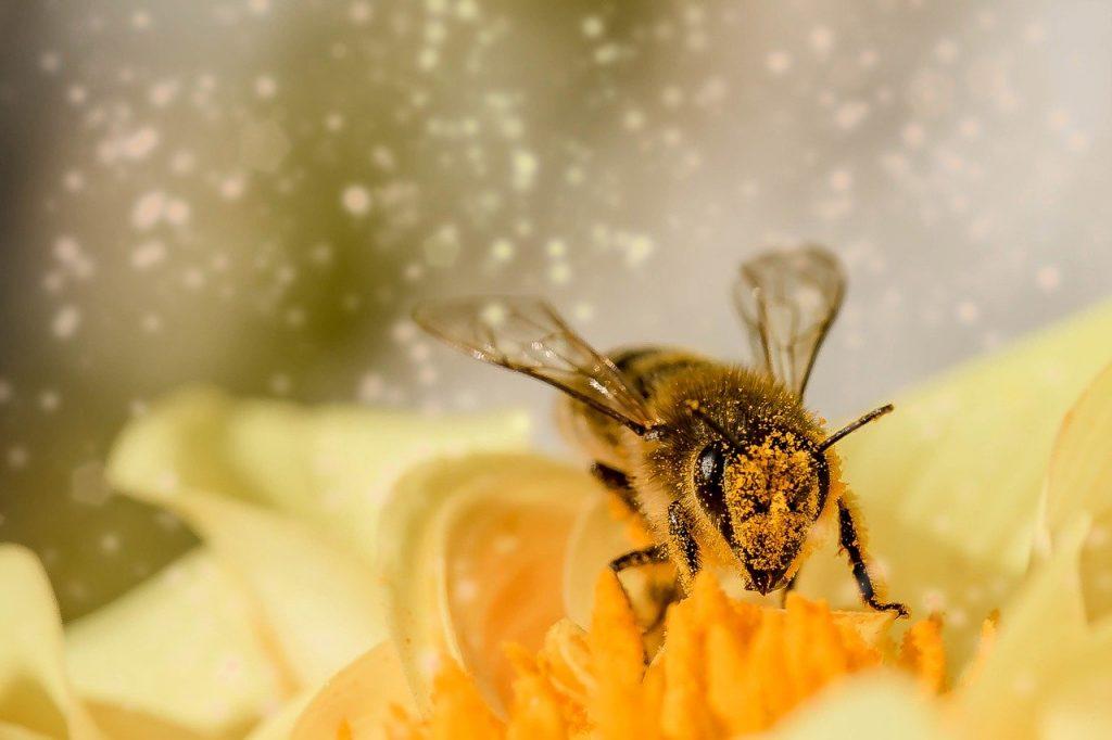 Producția de miere de albine, puternic afectată