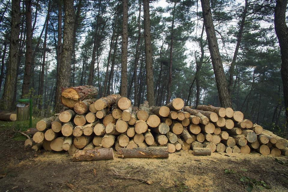 Pădurile sunt în pericol: Aproape 100 de dosare penale într-o săptămână, pentru infracțiuni în domeniul silvic